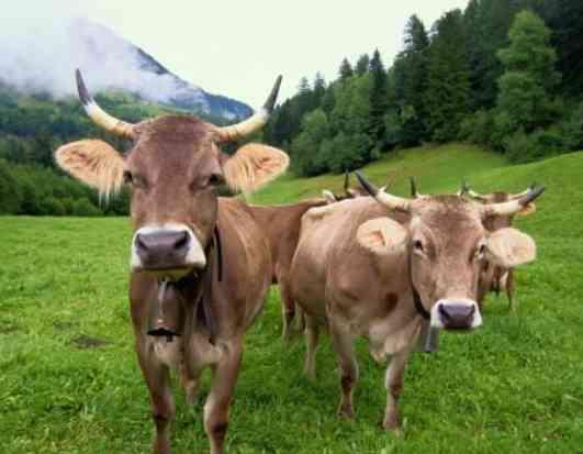 Gli animali della fattoria per una vacanza con i bambini for Grandi planimetrie della fattoria